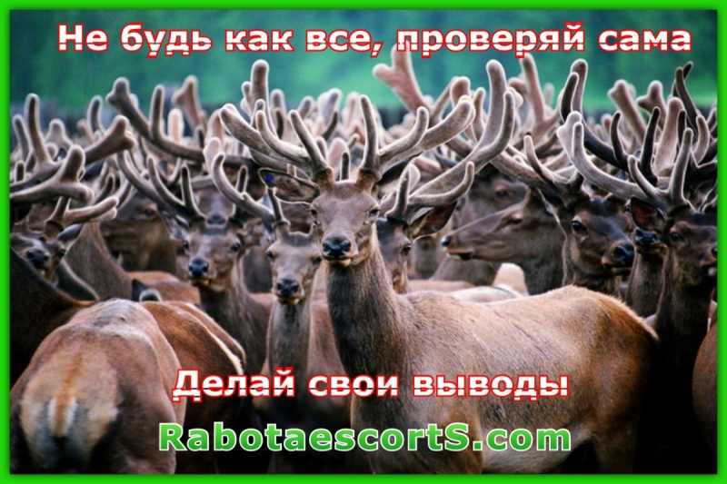 доски объявлений по знакомствам кмв